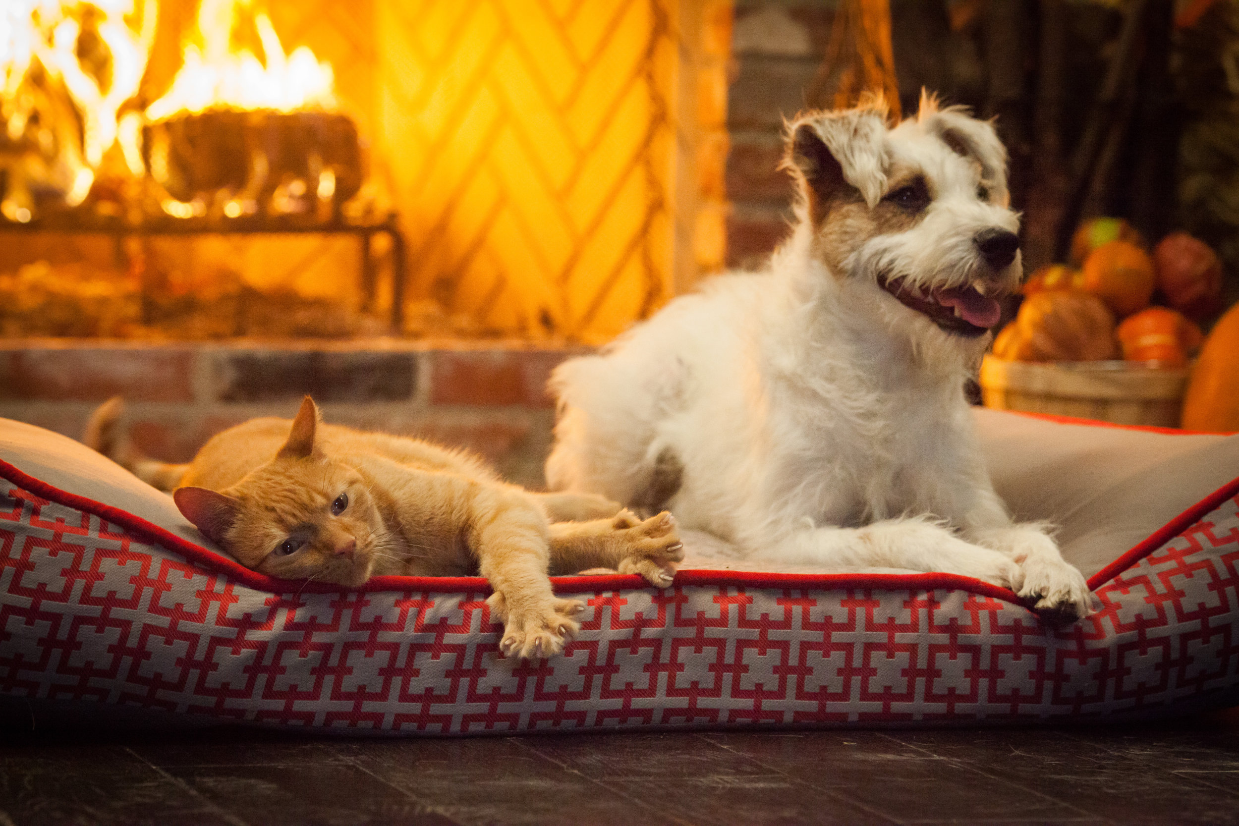 Preview - A Happy Yule Log | Hallmark Movies and Mysteries