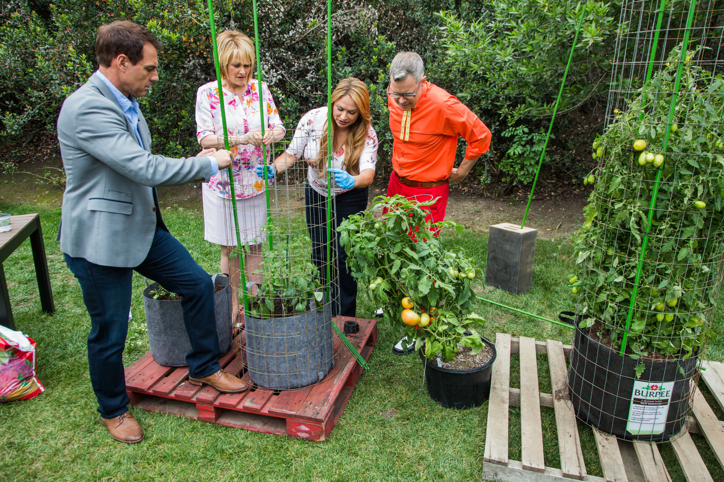 How To Grow Tomatoes Video Hallmark Channel