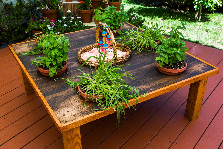 Diy Tabletop Cat Garden Home Family Video Hallmark Channel