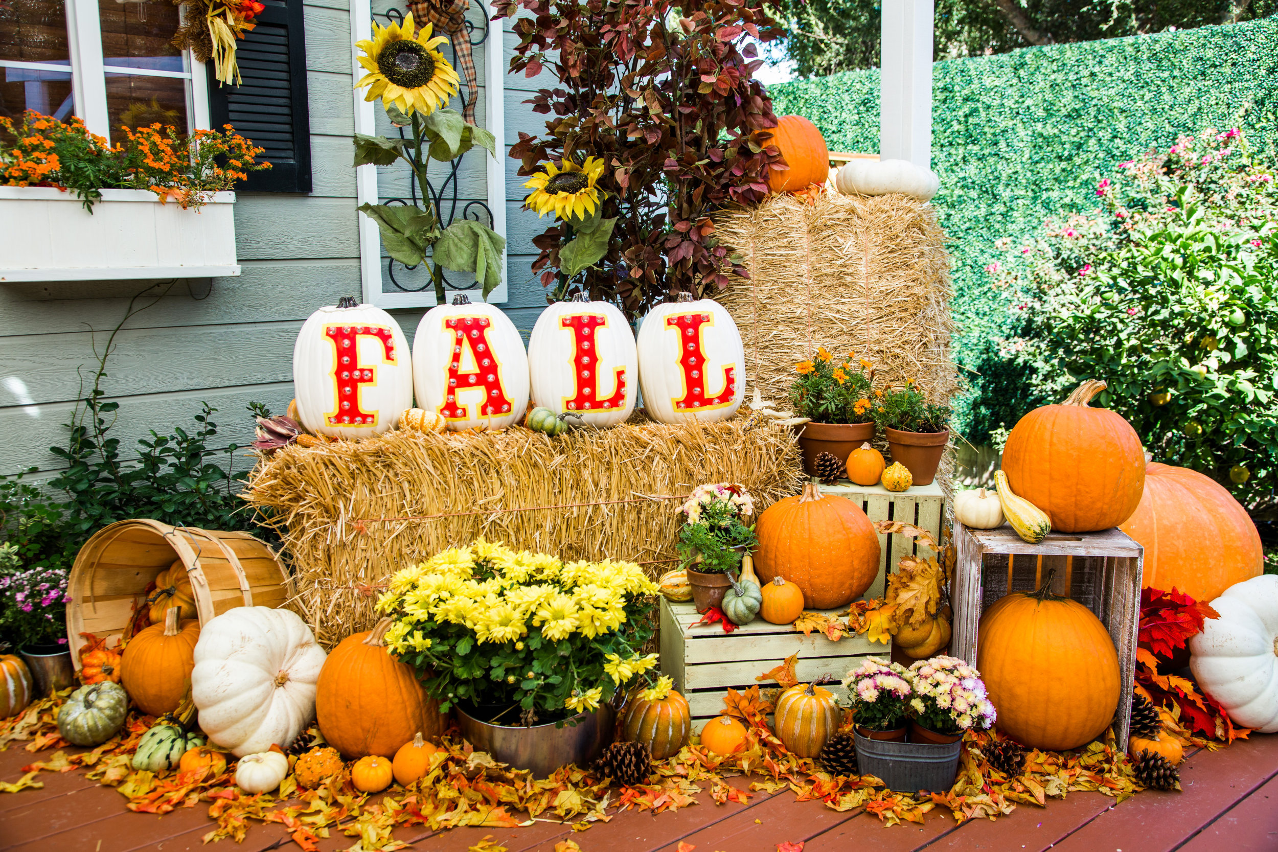 Image result for fall pumpkins