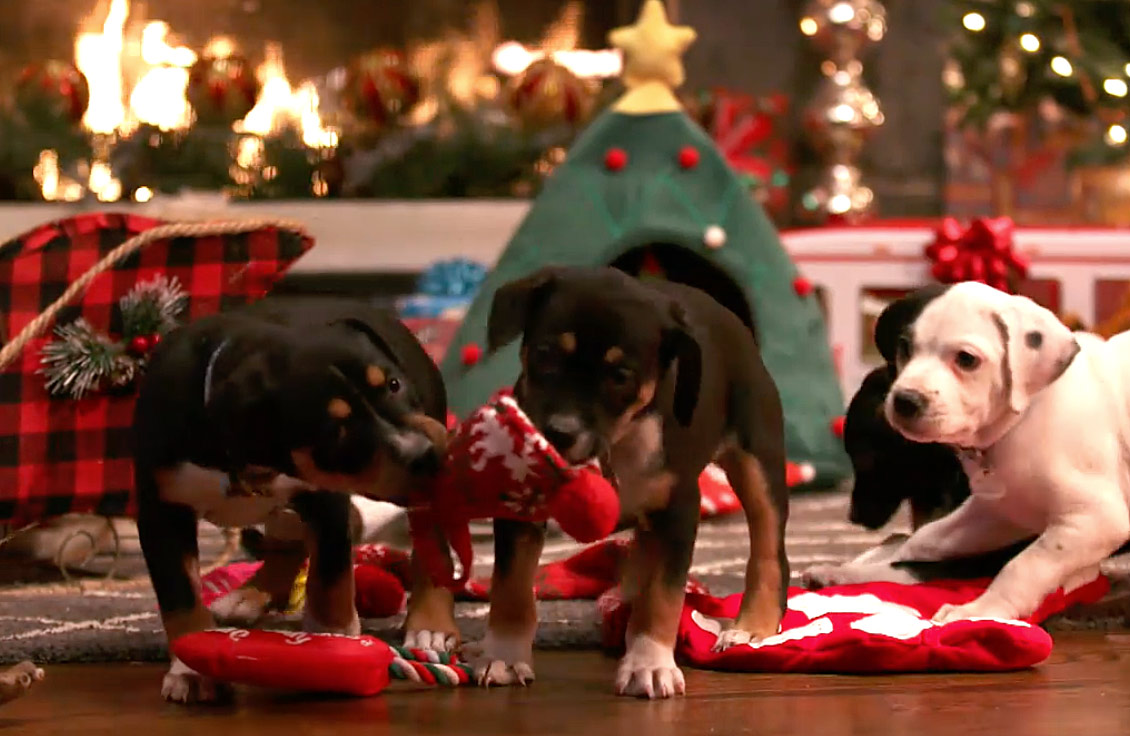 A Puppy For Christmas.Adoption Ever After A Puppy Christmas Hallmark Channel