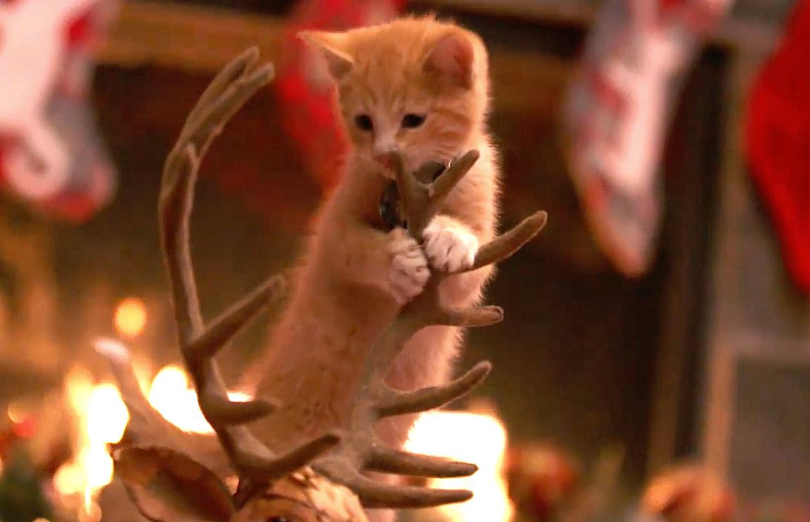 Kitten Christmas.Adoption Ever After A Kitten Christmas Hallmark Channel