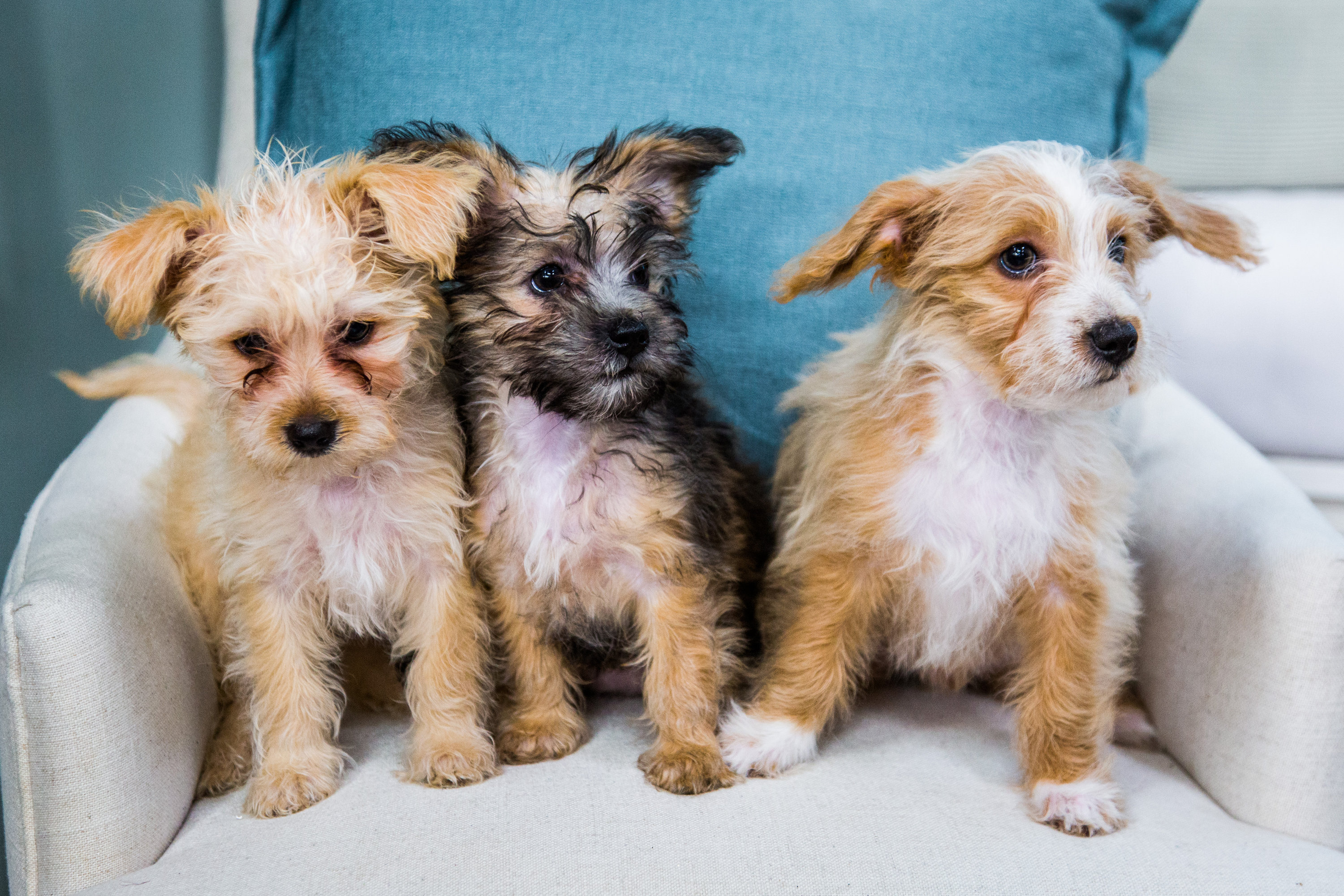 Three Puppies - Adoption Ever After - Home & Family - Video